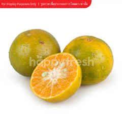 Tesco Thai Honey Tangerine Orange Size S