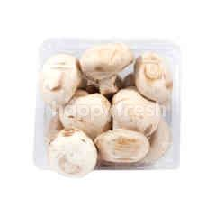 Adib Champignon Mushrooms