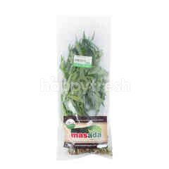 Masada Organic Water Spinach