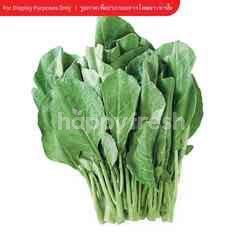 Gourmet Market Baby Kale
