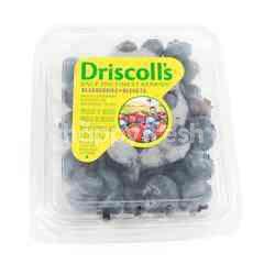 Driscoll's Blueberi