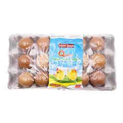 HOCK SOON Q Plus Fresh Chicken Eggs