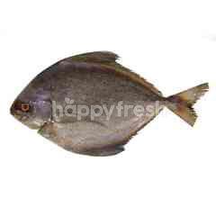 Ikan Bawal Hitam L