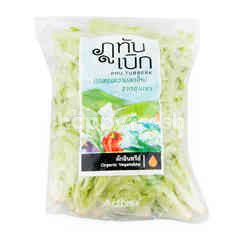 Phu Tubberk Organic Green Oak Leaf