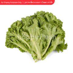Tesco Lettuce