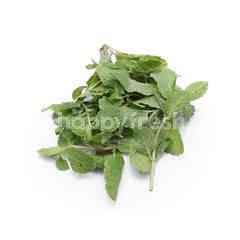 Fresco Mint Leaves