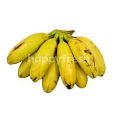 Mas Banana