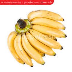 Big C Cavendish Banana