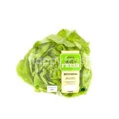 EAT FRESH Butterhead Lettuce