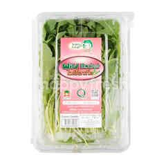 Super Fresh Wild Rocket