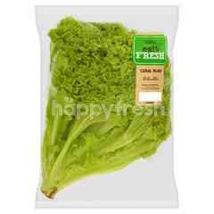 EAT FRESH Green Coral Lettuce