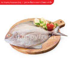 Sirikhun Black Pomfret Fish