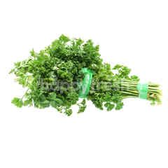English Parsley