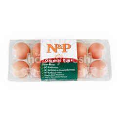 Natural & Premium Food Organic Eggs