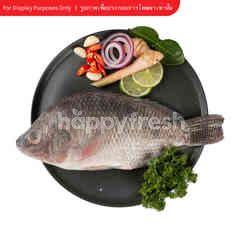 Big C Hygienic Nile Tilapia Fish