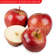 Tesco Red Apple Size S
