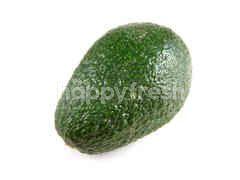 SA Avocado