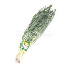Choice L Big Spring Onion