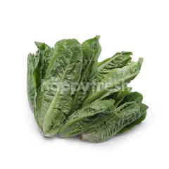Organic Mini Cos Lettuce