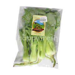 Organic Pakchoy