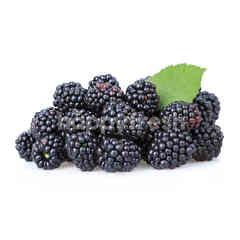 All Seasons Blackberries
