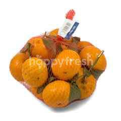 Shantang Leaves Orange