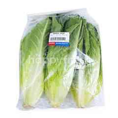 Imported Romaine Lettuce