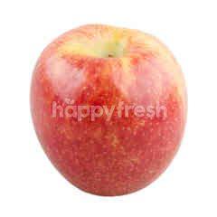 New Zealand Queen Apple