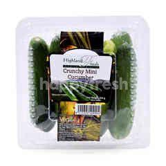HIGHLAND FRESH Crunchy Mini Cucumber