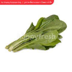 Tesco Chinese Kale