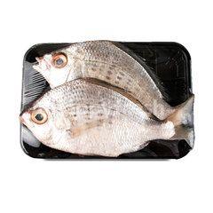 Gourmet Market Pacific Seabream Fish