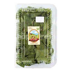 Organic Basil Leaf