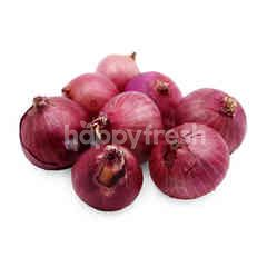 Little Red Onion