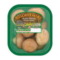 TUSCAN FIELDS Brown Button Mushroom