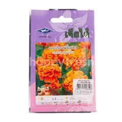 Chia tai French Marigold