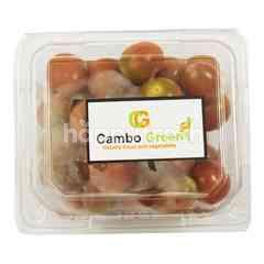 Cambo Green Tomat Komomo Organik