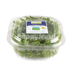 Natural & Premium Food Organic Watercress