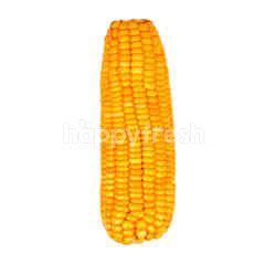 Peeled Sweet Corn