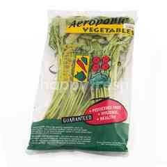 Amazing Farm Aeroponic Water Spinach