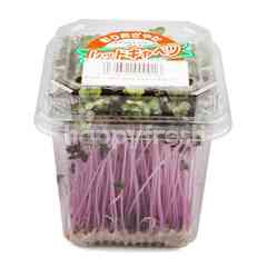 Red Cabbage Sprout
