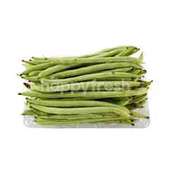 French Bean (Kacang Buncis)