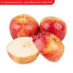 เทสโก้ แอปเปิ้ลเอ็นวี่ SIZE L