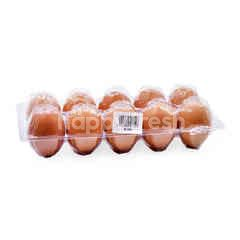 Grade B Eggs (10 Pieces)