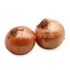 Yellow Big Onion
