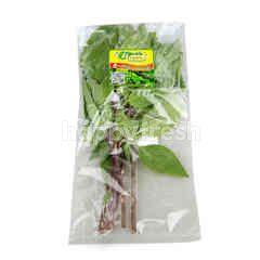 PPK Organic Sweet Basil