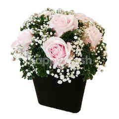 Garden Scents Imported Rose 6 Stem