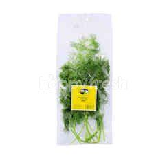 GENTING GARDEN Premium Quality Fresh Herbs Dill