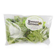 Sweet & Green Baby Cos Lettuce & Butterhead Lettuce