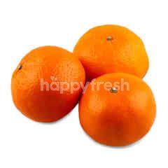 Gourmet Market Mandarin Orange