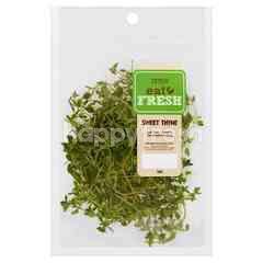 EAT FRESH Sweet Thyme Leaves